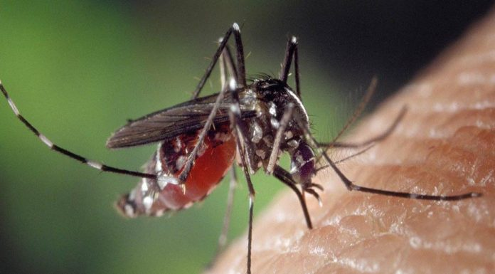 Zika Virus: So far 28 patients of Zika in Kerala: know everything about this mosquito-borne virus